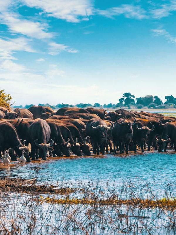 Victoria Falls & Chobe header