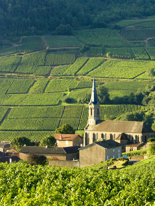 FRANCE - GREAT WINE ESTATES TOUR header